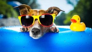 Dog Keeping Cool